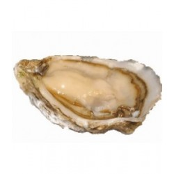 Special Ancelin Oyster No.1
